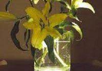 Vase uplighters
